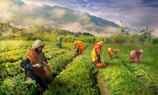 Con la agricultura nos acercamos a Dios